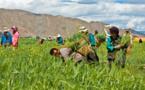 Agriculture durable : les multinationales et les petits exploitants peuvent-ils avancer ensemble ?