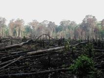 Le lucratif marché du bois illégal