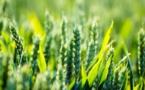 L'agriculture française face aux défis de sa transformation.